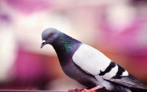 Taube Taube Schraube Schraube